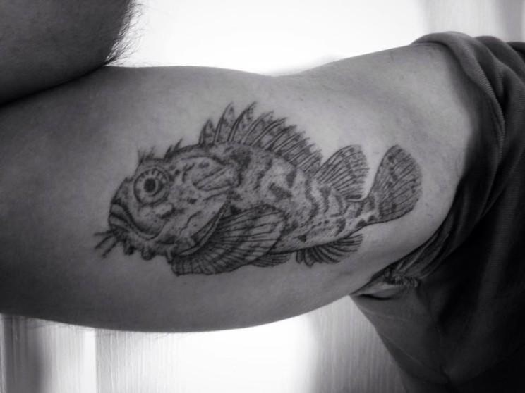 zed-fish